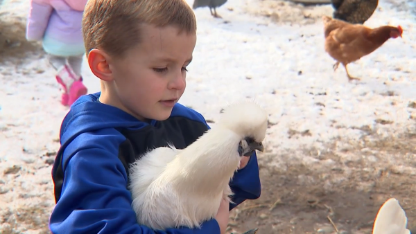 Boy, 6, starts backyard farm