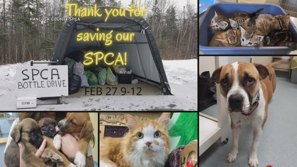 Hancock County SPCA hosts monthly bottle drive