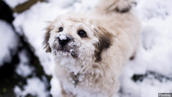 Keep your pets safe in cold weather