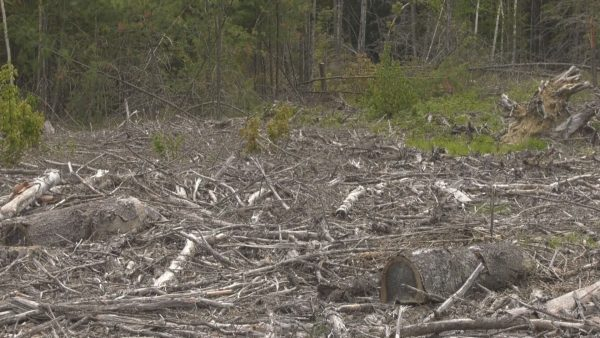 Maine Woodland Owners return to in person operations